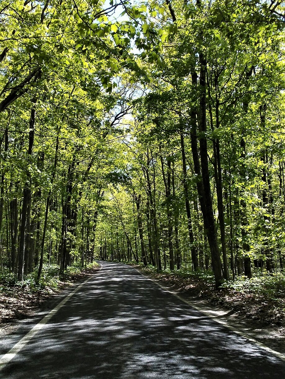 The Tunnel of Trees (M-119)